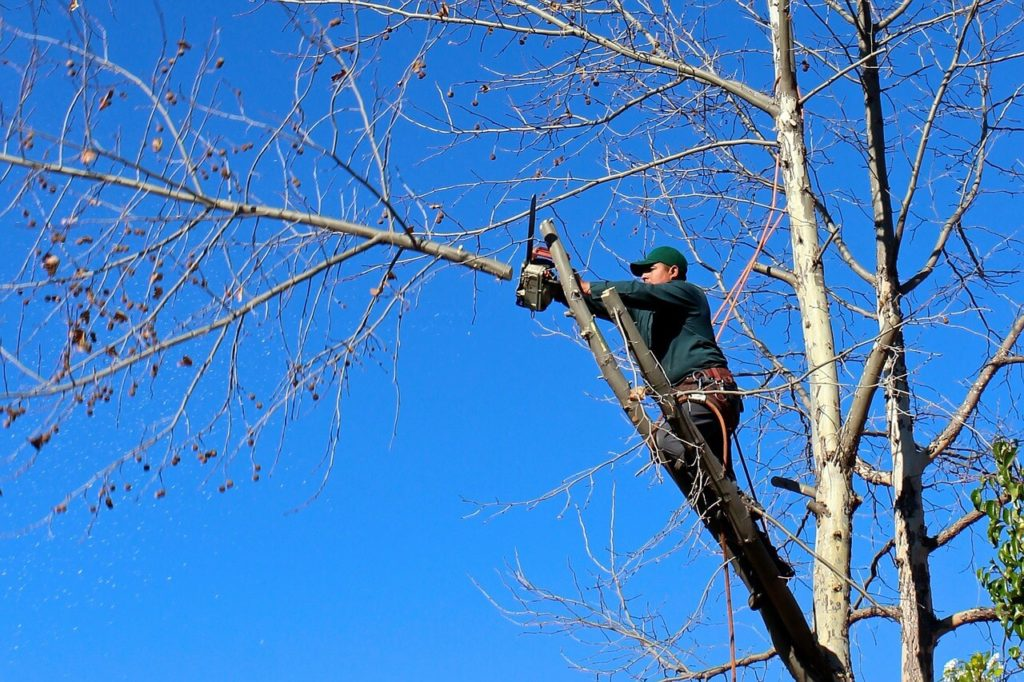 Contact Us-Deerfield Beach FL Tree Trimming and Stump Grinding Services-We Offer Tree Trimming Services, Tree Removal, Tree Pruning, Tree Cutting, Residential and Commercial Tree Trimming Services, Storm Damage, Emergency Tree Removal, Land Clearing, Tree Companies, Tree Care Service, Stump Grinding, and we're the Best Tree Trimming Company Near You Guaranteed!