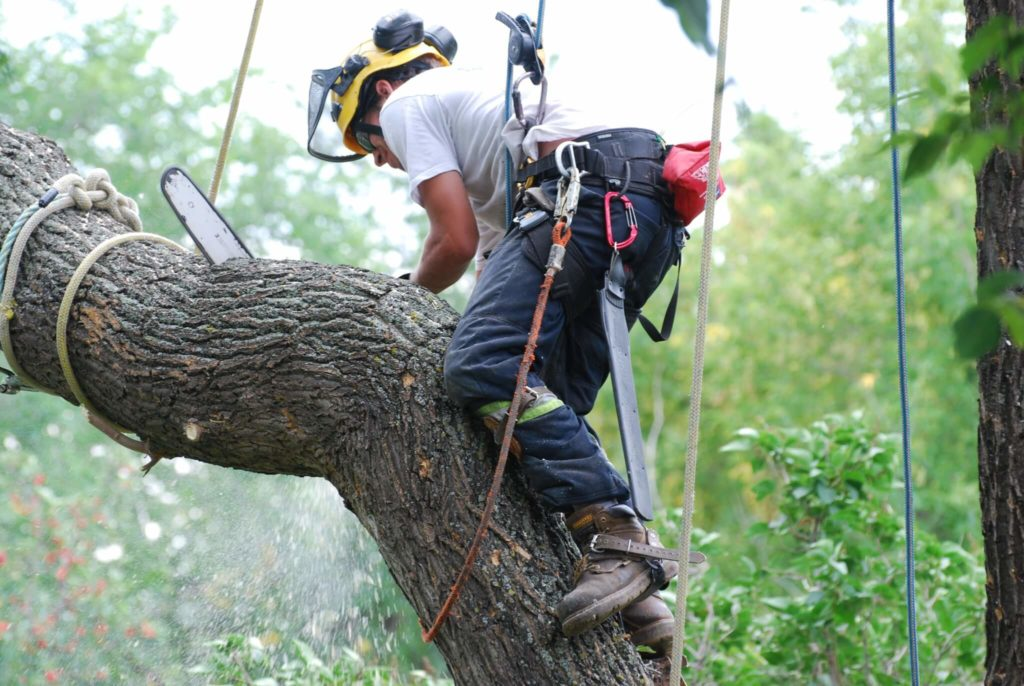 Deerfield Beach FL Tree Trimming and Stump Grinding Services Home Page Image-We Offer Tree Trimming Services, Tree Removal, Tree Pruning, Tree Cutting, Residential and Commercial Tree Trimming Services, Storm Damage, Emergency Tree Removal, Land Clearing, Tree Companies, Tree Care Service, Stump Grinding, and we're the Best Tree Trimming Company Near You Guaranteed!