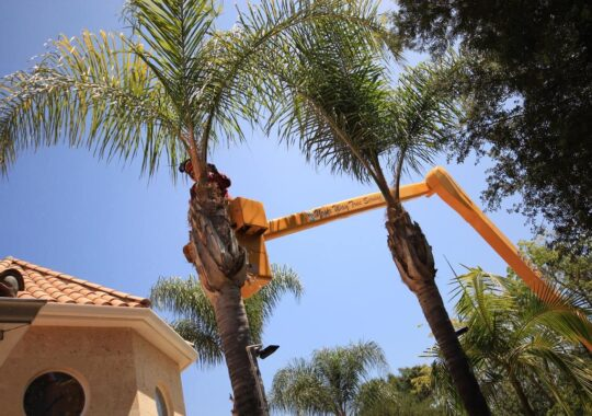 Palm Tree Trimming-Deerfield Beach FL Tree Trimming and Stump Grinding Services-We Offer Tree Trimming Services, Tree Removal, Tree Pruning, Tree Cutting, Residential and Commercial Tree Trimming Services, Storm Damage, Emergency Tree Removal, Land Clearing, Tree Companies, Tree Care Service, Stump Grinding, and we're the Best Tree Trimming Company Near You Guaranteed!