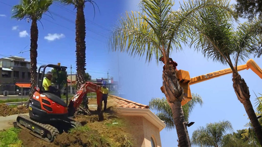 Palm tree trimming & palm tree removal-Deerfield Beach FL Tree Trimming and Stump Grinding Services-We Offer Tree Trimming Services, Tree Removal, Tree Pruning, Tree Cutting, Residential and Commercial Tree Trimming Services, Storm Damage, Emergency Tree Removal, Land Clearing, Tree Companies, Tree Care Service, Stump Grinding, and we're the Best Tree Trimming Company Near You Guaranteed!