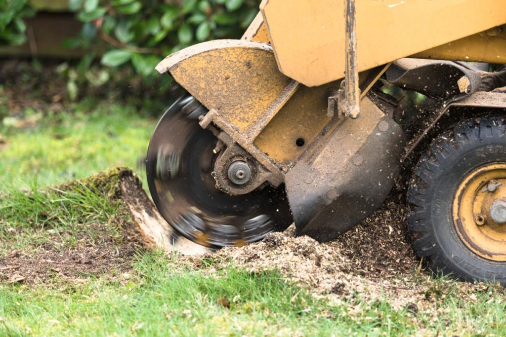 Stump Grinding-Deerfield Beach FL Tree Trimming and Stump Grinding Services-We Offer Tree Trimming Services, Tree Removal, Tree Pruning, Tree Cutting, Residential and Commercial Tree Trimming Services, Storm Damage, Emergency Tree Removal, Land Clearing, Tree Companies, Tree Care Service, Stump Grinding, and we're the Best Tree Trimming Company Near You Guaranteed!
