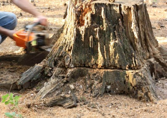 Stump Removal-Deerfield Beach FL Tree Trimming and Stump Grinding Services-We Offer Tree Trimming Services, Tree Removal, Tree Pruning, Tree Cutting, Residential and Commercial Tree Trimming Services, Storm Damage, Emergency Tree Removal, Land Clearing, Tree Companies, Tree Care Service, Stump Grinding, and we're the Best Tree Trimming Company Near You Guaranteed!