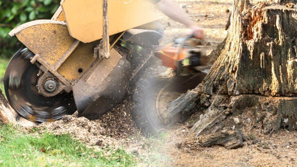 Stump grinding & removal-Deerfield Beach FL Tree Trimming and Stump Grinding Services-We Offer Tree Trimming Services, Tree Removal, Tree Pruning, Tree Cutting, Residential and Commercial Tree Trimming Services, Storm Damage, Emergency Tree Removal, Land Clearing, Tree Companies, Tree Care Service, Stump Grinding, and we're the Best Tree Trimming Company Near You Guaranteed!