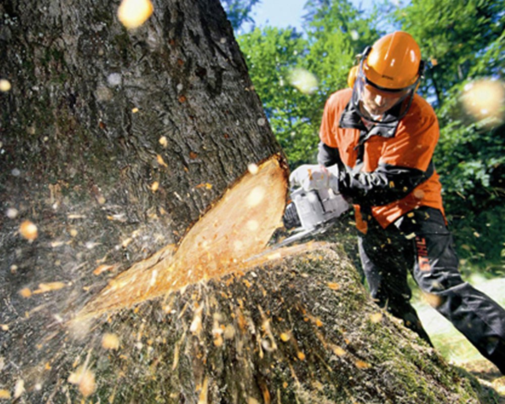 Tree Cutting-Deerfield Beach FL Tree Trimming and Stump Grinding Services-We Offer Tree Trimming Services, Tree Removal, Tree Pruning, Tree Cutting, Residential and Commercial Tree Trimming Services, Storm Damage, Emergency Tree Removal, Land Clearing, Tree Companies, Tree Care Service, Stump Grinding, and we're the Best Tree Trimming Company Near You Guaranteed!