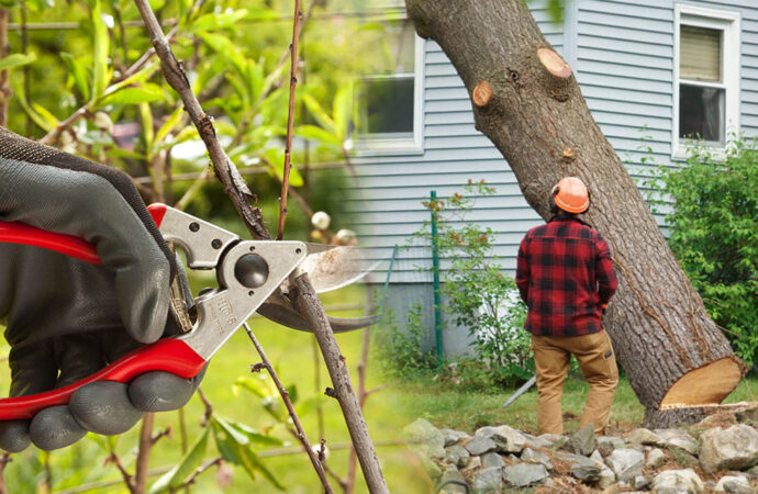 Tree pruning & tree removal-Deerfield Beach FL Tree Trimming and Stump Grinding Services-We Offer Tree Trimming Services, Tree Removal, Tree Pruning, Tree Cutting, Residential and Commercial Tree Trimming Services, Storm Damage, Emergency Tree Removal, Land Clearing, Tree Companies, Tree Care Service, Stump Grinding, and we're the Best Tree Trimming Company Near You Guaranteed!